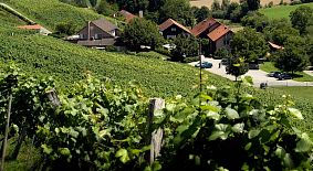 KLUS 177- biodynamisches Weingut, Eventlocation